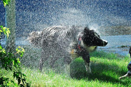 Image depicting the Category Adult Dog Wet